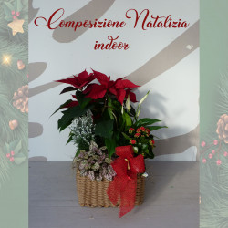 Special Natale...
